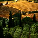 Tuscany, II by Mary Ann Reilly