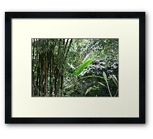 A Green Tranquil Forest Framed Print