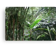 A Green Tranquil Forest Canvas Print