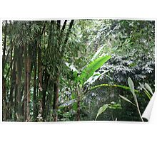A Green Tranquil Forest Poster