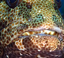 Brown-marbled Grouper by cooperscuba