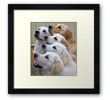 Five Golden Retrievers Framed Print