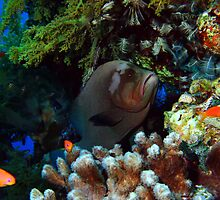 Red-mouth Grouper by cooperscuba