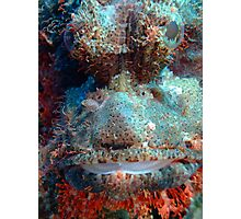 Smallscale Scorpionfish Photographic Print