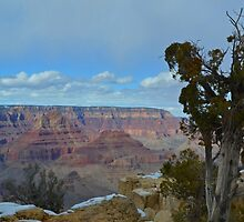 Grand Canyon 17 by Leona Bessey