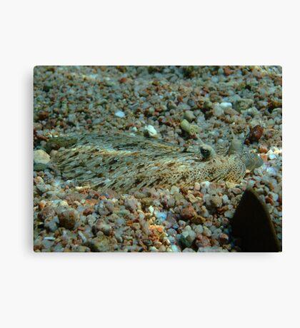 Panther Flounder Canvas Print