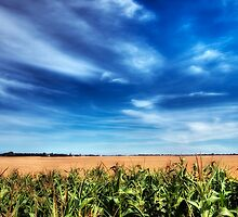Corn and Wheat by Myron Watamaniuk
