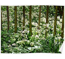 Wild Garlic ~ Lyme Regis Poster