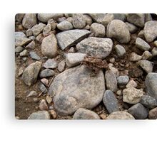 Toad Canvas Print