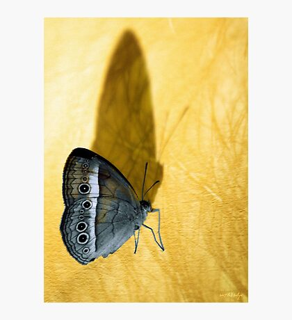 Chasing Shadows Photographic Print