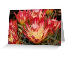 Protea cynaroides Greeting Card