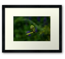 Taking a Bow Framed Print