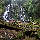 Nelson Falls - Tasmania by Michael Treloar