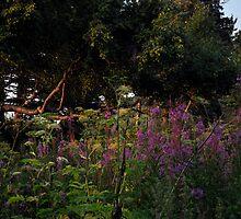 Wild Garden  by Barbara Burkhardt