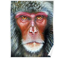 Primate- Macaque Poster