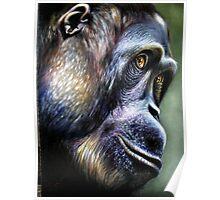 Primate.-orangutan Poster