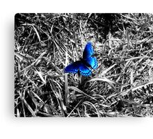Black, White, and Blue Canvas Print