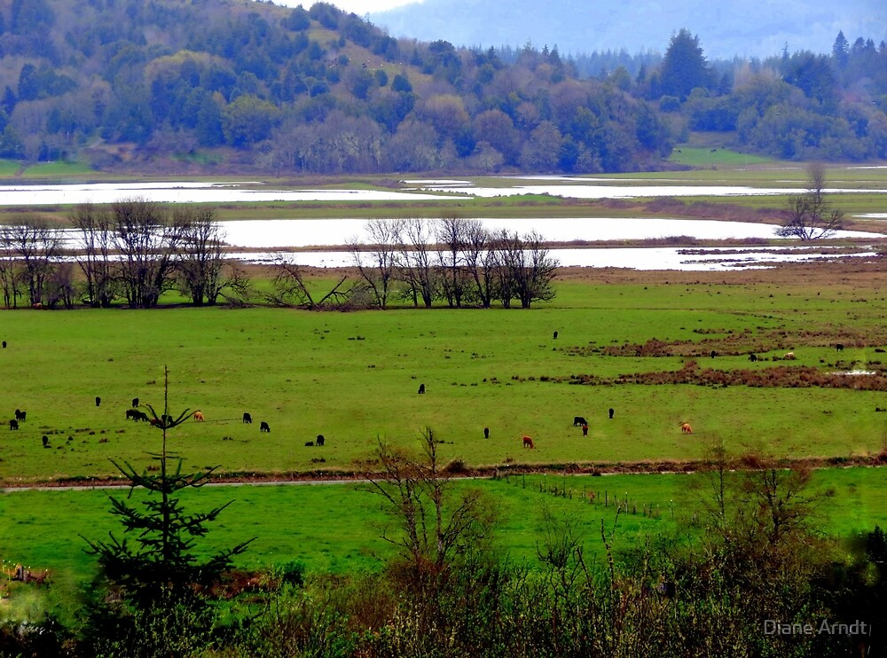 How Green Is My Valley...Coquille, Oregon by Diane Arndt