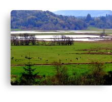 How Green Is My Valley...Coquille, Oregon Canvas Print