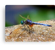 *BLUE DRAGONFLY*  Canvas Print