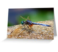 *BLUE DRAGONFLY*  Greeting Card