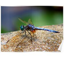 *BLUE DRAGONFLY*  Poster