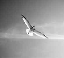 In Flight by AlexGoulet