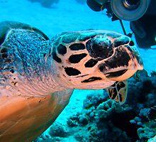 Hawksbill Turtle by lilithlita
