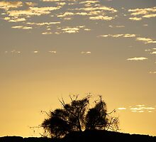 "Australia: ""Golden Outback Dawn"", Northern Territory by Kelly Sutherland"