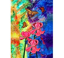 Swallowtail Attraction Photographic Print
