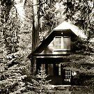 Cabin in the Woods by Stephen  Van Tuyl