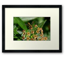 Who Took The Pollen Framed Print
