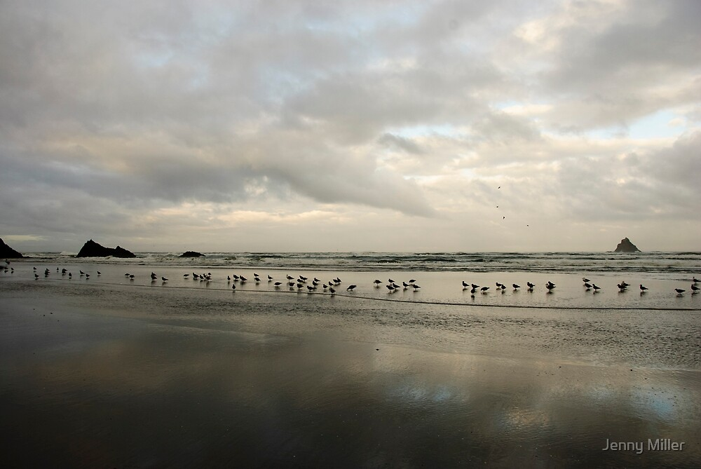 Birdy Beach by Jenny Miller