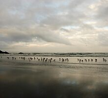 Birdy Beach by Jenny Ryan