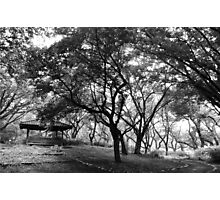 Alone in the Woods Photographic Print