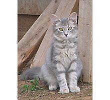 Here Kitty Kitty Photographic Print