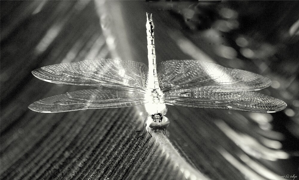 Wings of Crystal by Holly Kempe