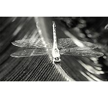 Wings of Crystal Photographic Print
