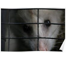 A Possum's Journey Poster