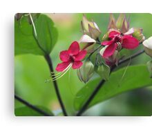 Floral Surprise Canvas Print