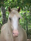 Palomino In The Woods by Ginny York