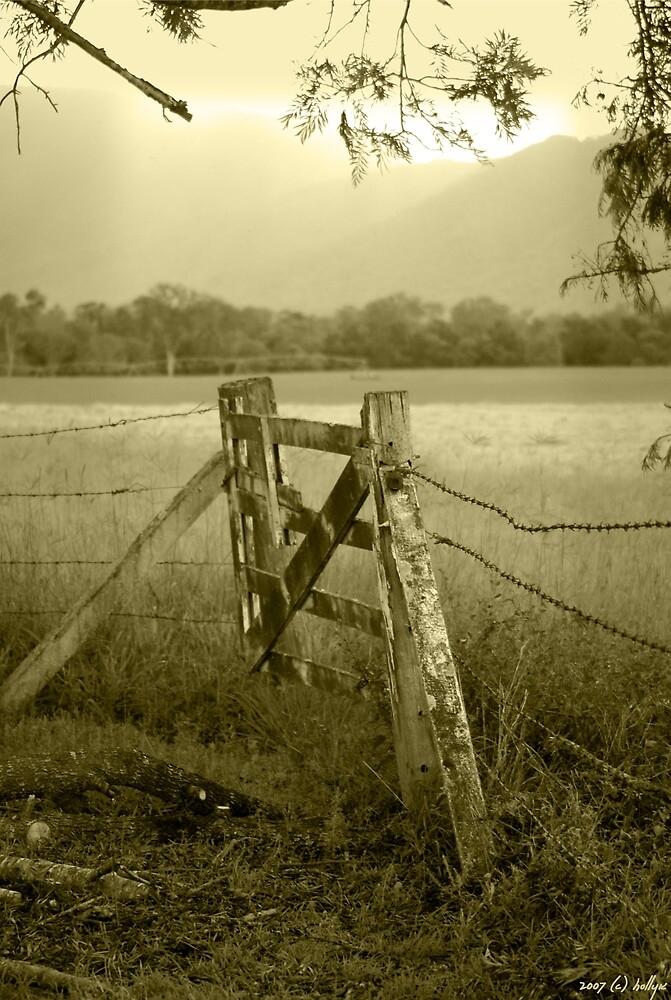 Forgotten Fields by Holly Kempe