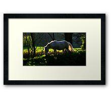 Forest Glade Framed Print
