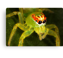 Green Jumping Spider Canvas Print