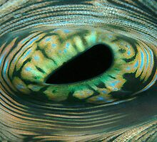 The Eye of the Reef by Dr Andy Lewis