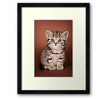 Fluffy tabby kitten Framed Print