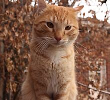 Beautiful Magestic Orange Cat with leaves behind by GarStopmotion