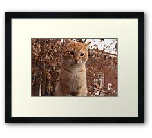 Beautiful Magestic Orange Cat with leaves behind Framed Print