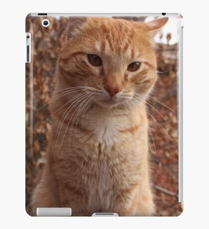 Beautiful Magestic Orange Cat with leaves behind iPad Case/Skin