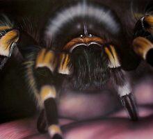 Bird Eating Spider by Darren Baldock